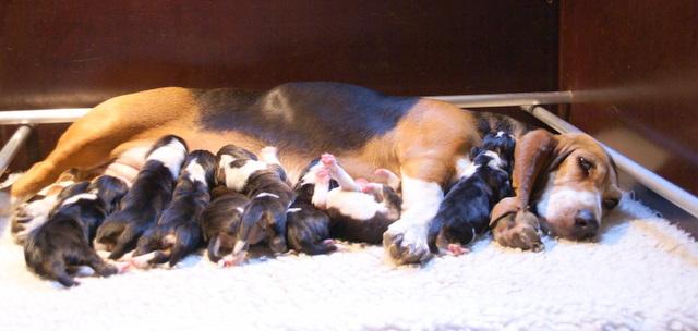 Annina stolze Mutter von neun Welpen
